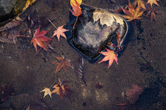 Autumn maple leaves in water Stock Images