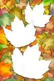 Autumn maple leaves with white leaf spaces Stock Photo