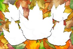 Autumn maple leaves with white leaf spaces Stock Images