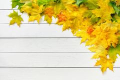 Autumn maple leaves on white wood Stock Images