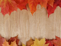 Autumn maple leaves on wood surface stock image