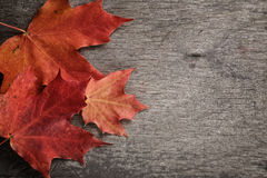 Autumn maple leaves on wood surface Stock Images