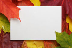 Autumn maple leaves on wood surface with paper card Stock Photos