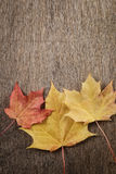 Autumn maple leaves on wood surface Royalty Free Stock Images