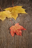 Autumn maple leaves on wood surface Stock Photography