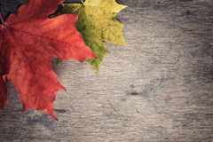 Autumn maple leaves on wood table royalty free stock photos