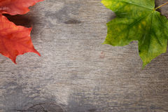 Autumn maple leaves on wood table Royalty Free Stock Photo