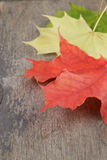 Autumn maple leaves on wood table Royalty Free Stock Image