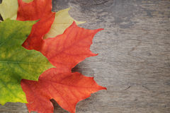 Autumn maple leaves on wood table Stock Photos