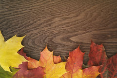 Autumn maple leaves on wood table Stock Photo