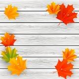 Autumn maple leaves on wood Stock Photos