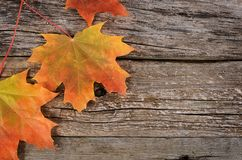Autumn maple leaves on wooden background Stock Photography