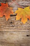 Autumn maple leaves on wooden background Royalty Free Stock Image