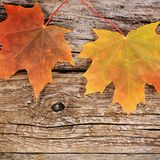Autumn maple leaves on wooden background Stock Image