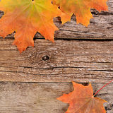 Autumn maple leaves on wooden background Royalty Free Stock Photo