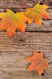 Autumn maple leaves on wooden background Royalty Free Stock Images