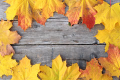 Autumn maple leaves on a wooden floor. Frame for your design. Rustic Wood with Fall leaves Stock Photos