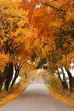Autumn maple road. Autumn - road with colorful, vibrant maple trees. Fall in Poland royalty free stock photography