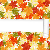 Autumn maple seamless pattern with ripped stripe Stock Images