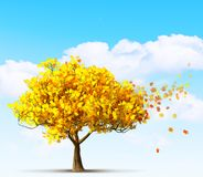 Autumn maple tree. An autumn maple tree on blue sky background stock photo
