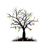 Autumn maple  tree Royalty Free Stock Photo