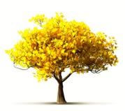 Autumn Maple Tree Lizenzfreie Stockfotografie