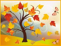 Autumn maple tree background, vector Royalty Free Stock Images
