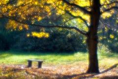 Autumn maple tree blurred  monocle. Autumn maple tree blurred  monocle with wood bench Royalty Free Stock Photography