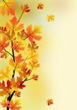 Autumn maple tree. Autumn maple tree branch Stock Images