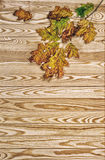 Autumn maple tree branches wooden background vintage style Stock Photos