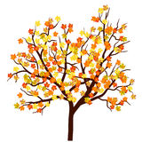 Autumn maple tree vector illustration