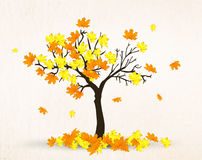 Autumn maple tree Stock Images