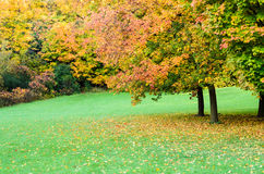 Autumn maple tree landscape. Colourful leafs on maple trees and other vegetation in the fall stock image