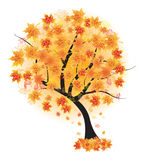 Autumn maple tree leaf fall. Vector illustr Stock Images