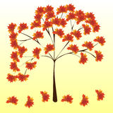 Autumn maple tree leaves nature background Stock Photos