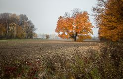 Autumn Maple Tree In October Foto de archivo
