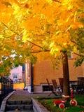 Autumn maple trees in fall city park. Autumn maple trees in a fall city park royalty free stock image