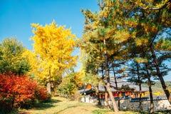 Autumn maple trees and Korean traditional house at Namhansanseong Fortress in Korea. Autumn maple trees and Korean traditional house at Namhansanseong Fortress stock photos