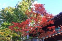 Autumn maple trees near Rinnoji temple of Nikko, Japan Stock Photo
