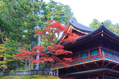 Autumn maple trees near Rinnoji temple of Nikko, Japan. View of red maple trees in autumn season near Rinnoji temple area of Nikko, Japan royalty free stock photo