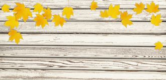 Autumn maple twig with yellow leaves on wood. Autumn maple twig with yellow leaves on white wooden background. Flat lay. Top view royalty free stock photography