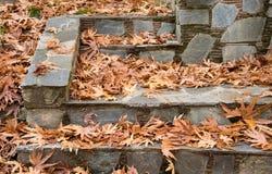 Autumn maple yellow leaves Royalty Free Stock Photo