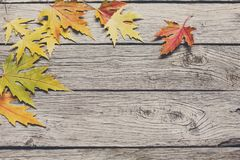 Autumn maple yellow leaves on rustic wood background. Fall background. Yellow maple leaves on rustic weathered old wood with copy space. Beautiful autumn season Stock Image