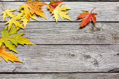 Autumn maple yellow leaves on rustic wood background. Fall background. Yellow maple leaves on rustic weathered old wood with copy space. Beautiful autumn season Stock Photos