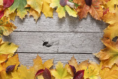 Autumn maple yellow leaves on rustic wood background. Autumn maple leaves frame on rustic weathered old wood background with copy space. Beautiful fall season Stock Images