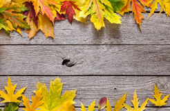 Autumn maple yellow leaves on rustic wood background. Autumn maple leaves frame on rustic weathered old wood background with copy space. Beautiful fall season Stock Photography