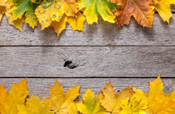 Autumn maple yellow leaves on rustic wood background. Autumn maple leaves frame on rustic weathered old wood background with copy space. Beautiful fall season Royalty Free Stock Photo