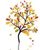 Autumn maples Stock Image