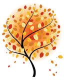 Autumn maples Royalty Free Stock Photography