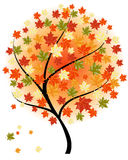 Autumn maples Royalty Free Stock Photos